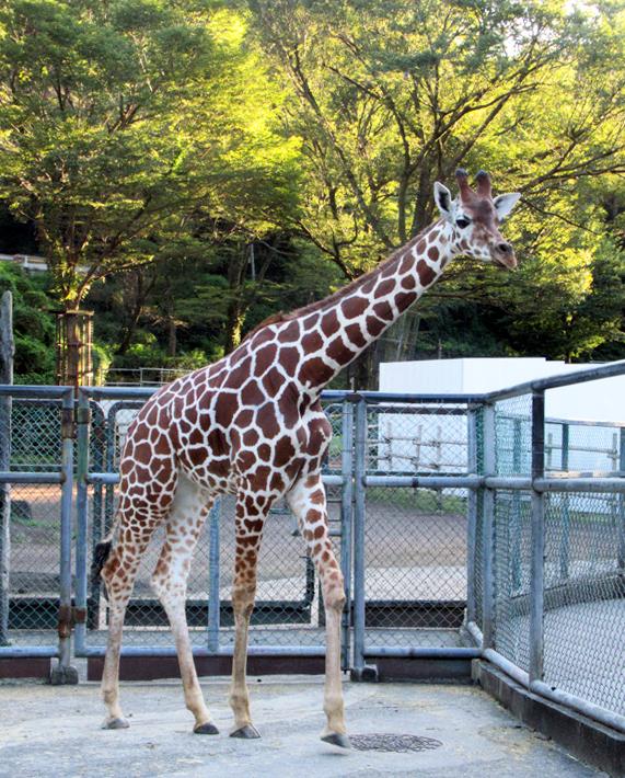 動物園 帯広
