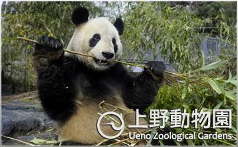 「上野動物園」の画像検索結果