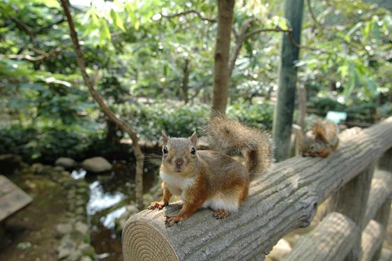「井の頭自然文化園」の画像検索結果